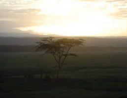 Kenya-Nakuru (1)