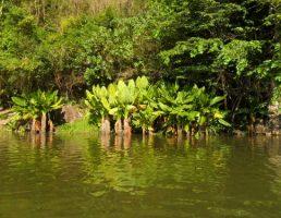 Madagascar-Mangrove